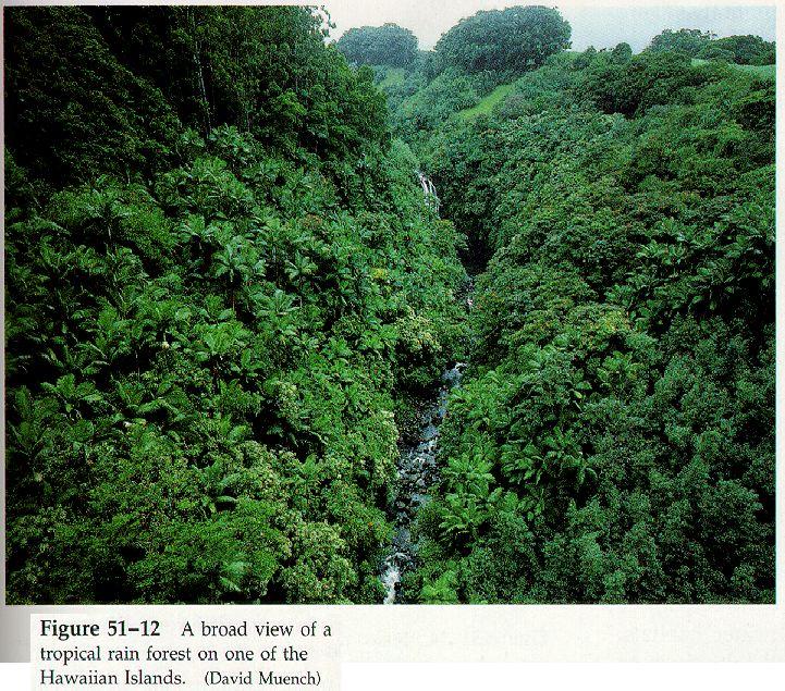 tropical-rainforest.jpg